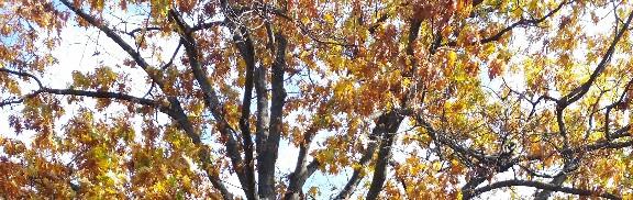 A Leaf, a Breeze and aRiver